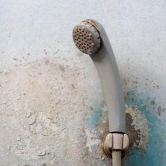 Amatérské řešení plísní na stěnách nemá velkou šanci na úspěch. Čištění, odstranění plísní Pardubice