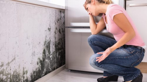 Pomocí nátěru LSG odstraníte plísně. Likvidace, čištění plísní Praha. Mytí dezinfekce fasád