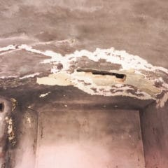 Splísní na stěně i nábytku si poradí nátěr LSG. Likvidace plísní vPraze.