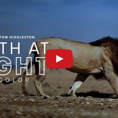 Apple Posts Official Trailer for 'Earth At Night In Color' [Video]