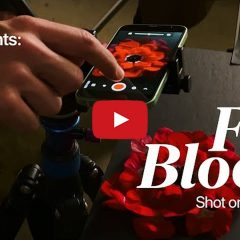 Apple Posts New Shot on iPhone Experiment: Full Bloom [Video]